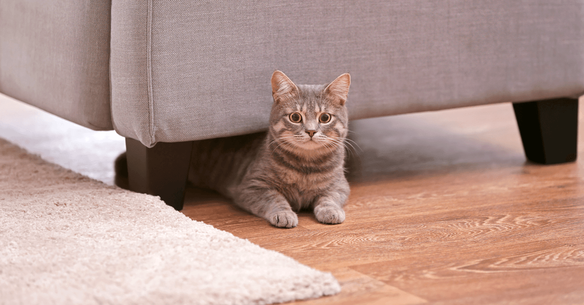 camera para casa - gato embaixo do sofa